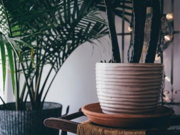 Green is the New Black: The Health Benefits of Indoor Plants